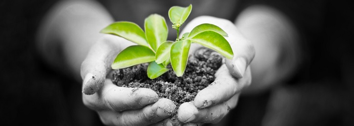 Steps to a Greener Workplace